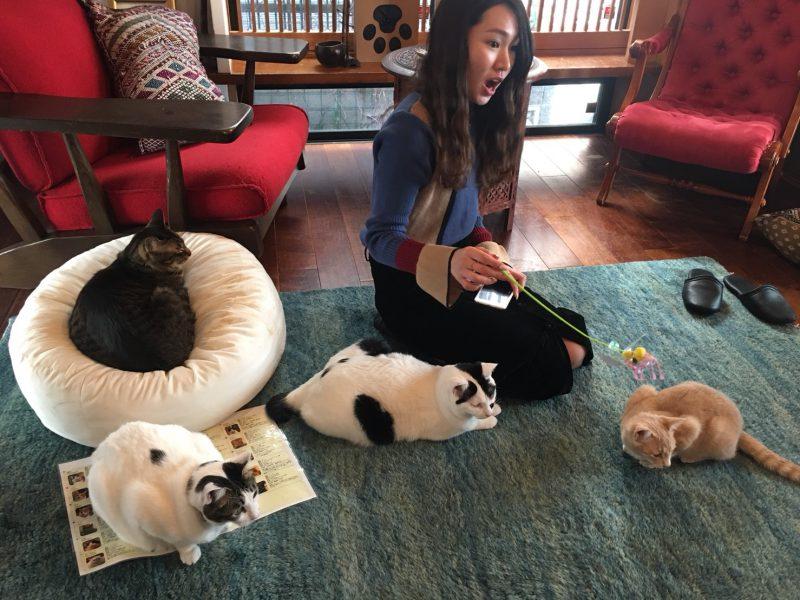 すぐくっついてきてくれる猫さんたち