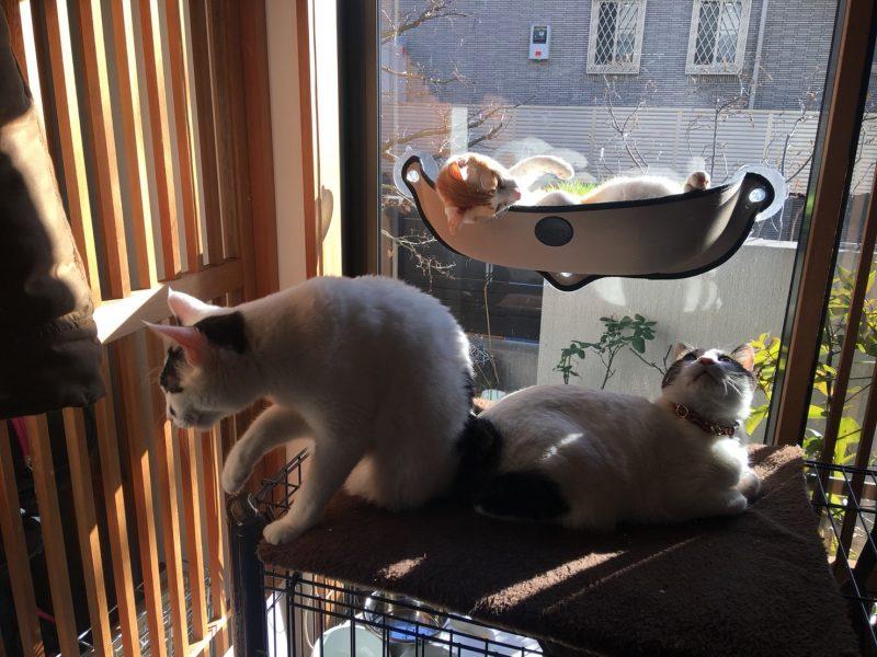 里親募集の猫さんもいらっしゃいます