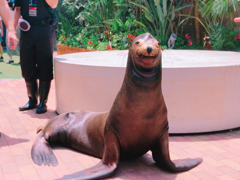 近くで笑顔を見せてくれたサービス精神旺盛なアシカ