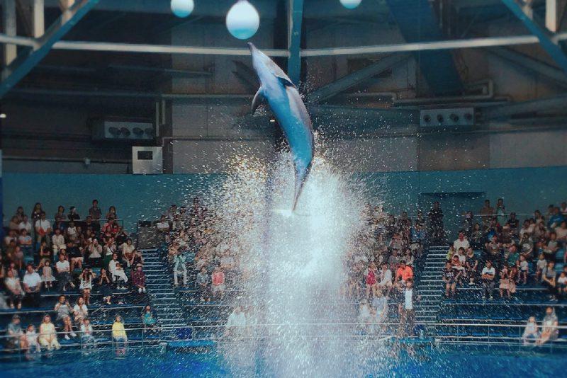 大人気のイルカショー! 大迫力のイルカの演技と輝く映像のコラボレーション