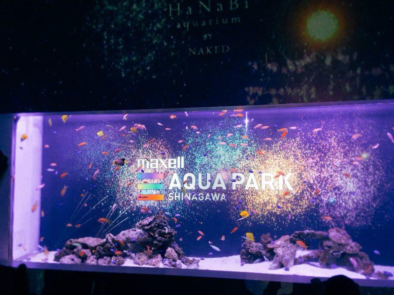 映像と魚たちのコラボレーションは見ていてうっとり